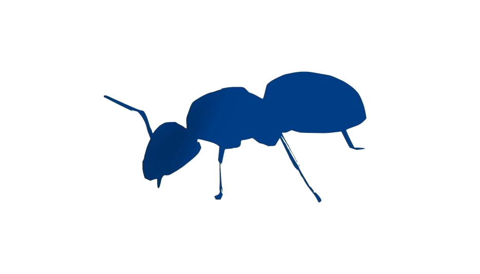 Ant Png Image With Transparent Background