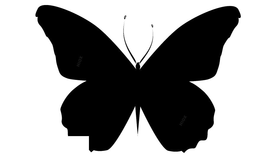 Insects PNG Clipart Images