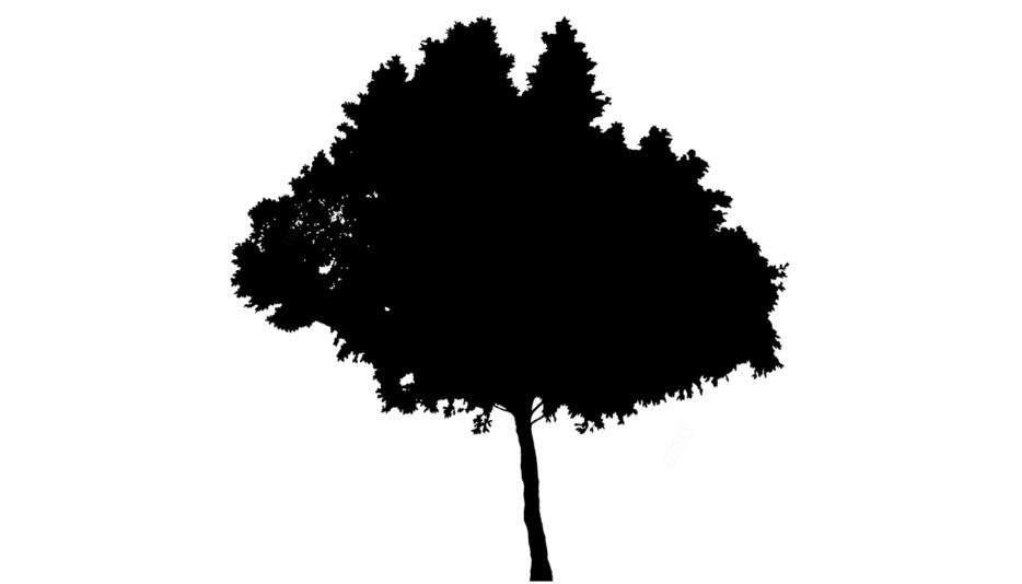 Tree Drawings PNG Transparent Images