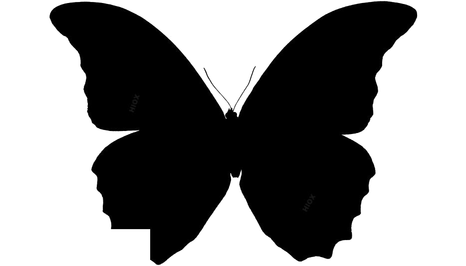 Colorful Butterfly Png Clipart