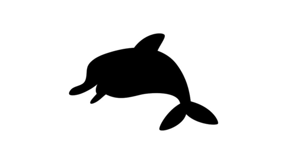 Dolphin Png Background