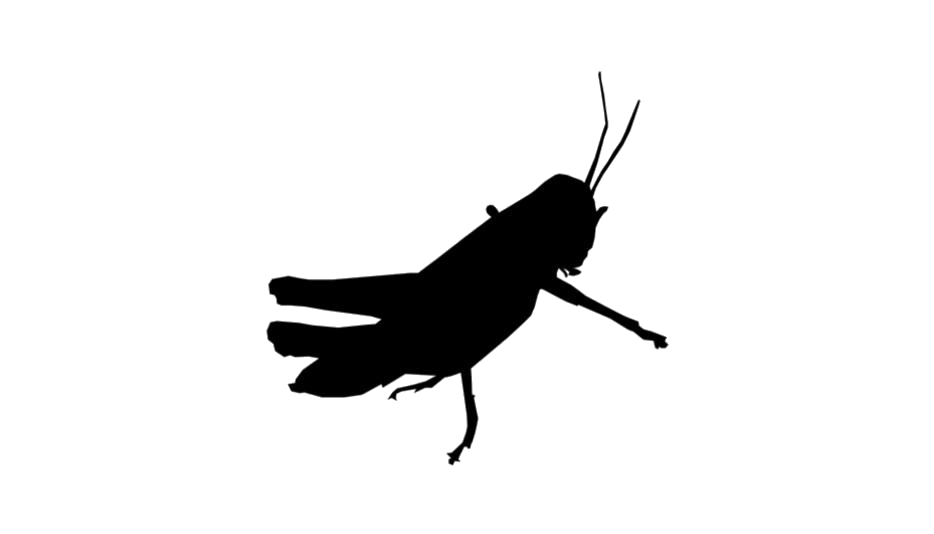 Grasshopper Insect Silhouette Png