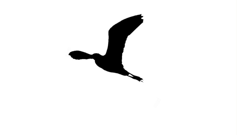 Hooray Birds Png Black And White