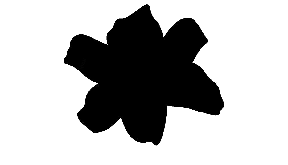 Lily Flower Art Png Free Download