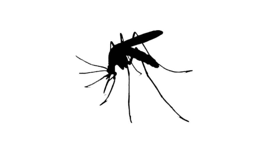 Mosquito Png Free Clipart