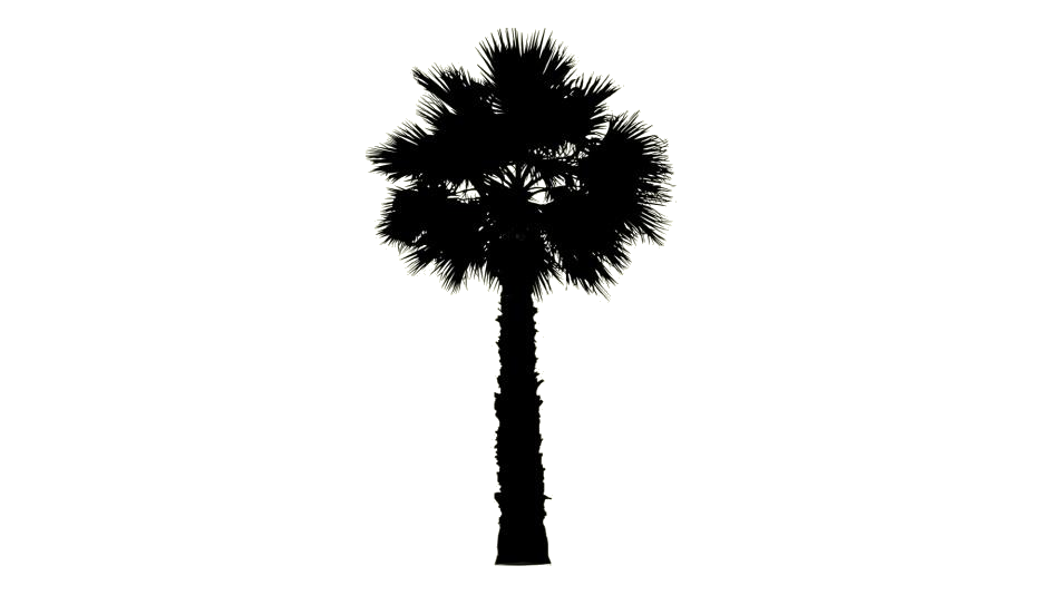 Tree PNG Images, Pictures Free Download