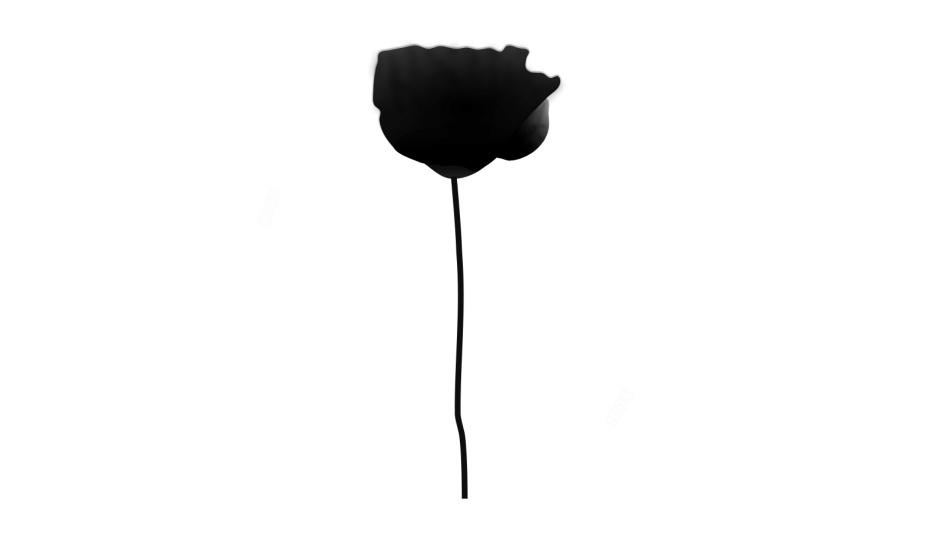 Poppy Flower Image With Transparent Background