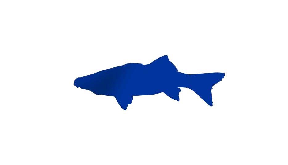 Saltwater Sports Fish Clipart Png Black And White