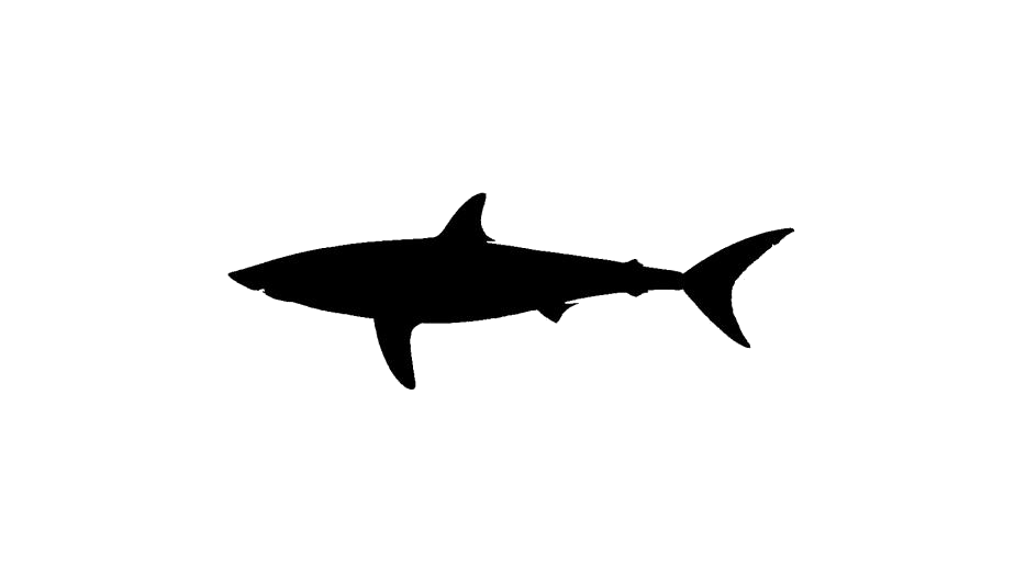 Shark Png Free Download