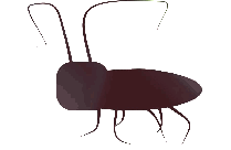 Roach Silhouette Transparent Background