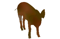 Grizzly Bear Png Transparent Image For Download