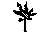 Pine Tree Png Background Hd