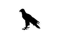 Real Eagle Bird Silhouette Transparent Background