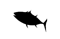 Transparent Bonito Fish Art Png Clipart Free Download