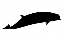 Bottlenose Whales Vector Png