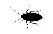 Cockroach Hd Png Clipart Download