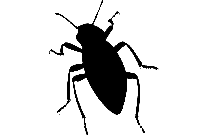 Transparent Flying Insect Clipart