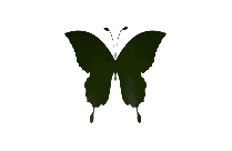 Butterfly Png Drawing