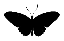 Butterfly Png Hd Image, Transparent Butterfly Clipart