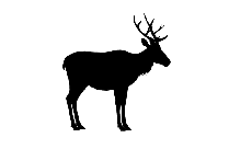 Transparent Hinny Animals Png For Free