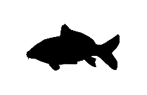 Carp Fish Png Silhouette Transparent Background