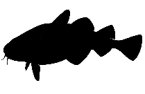 Florida Fish Png Clipart Image For Download