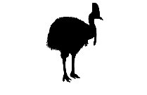 Cassowary Png Clipart Download