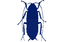 Cockroach Png Silhouette Transparent Background