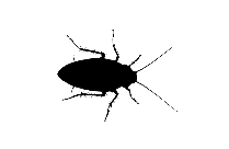 Cockroach Insect Png Image Clip Art