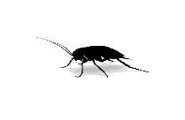 Animated Cockroach Png Hd Wallpaper