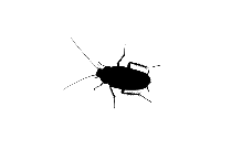 Cockroach Png Clipart Free Download