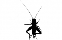 Flying Roaches Png Free