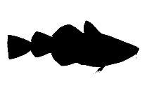 Monkfish Png, Transparent Monkfish Image
