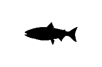 Almaco Jack Fish Art Png Black And White