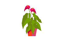 Colorful Calla Lily Plant Png