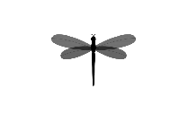 Colorful Dragonfly Png