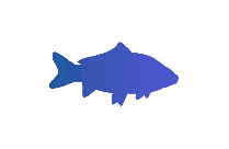 Transparent Baby Sharks Png Vector