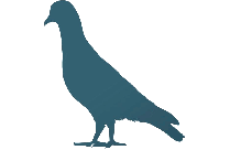 Colorful Pigeon Png,  Png Image For Download