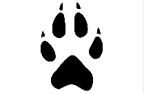 Cute Coyote Footprint Transparent Background