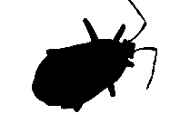 Cute Scary Bug Transparent Background