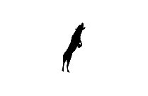 Jumping Dog Png Clipart Download