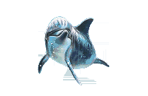 Dolphin Fish Transparent PNG Vector
