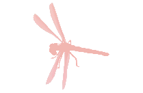 Dragonfly Png Image With Transparent Background