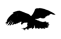 Eagle Spreading Its Wings Png Background Hd