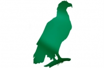 Eagle Image With Transparent Background