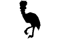 Emu Png Image Clipart