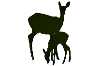 Fawn Side View Silhouette Transparent Background
