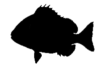 Transparent Eastern Wahoo Clipart Png