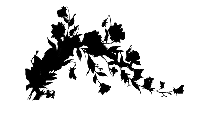 Flowers Border Png Silhouette