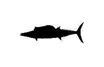 Fish Png Hd Image With Transparent Background